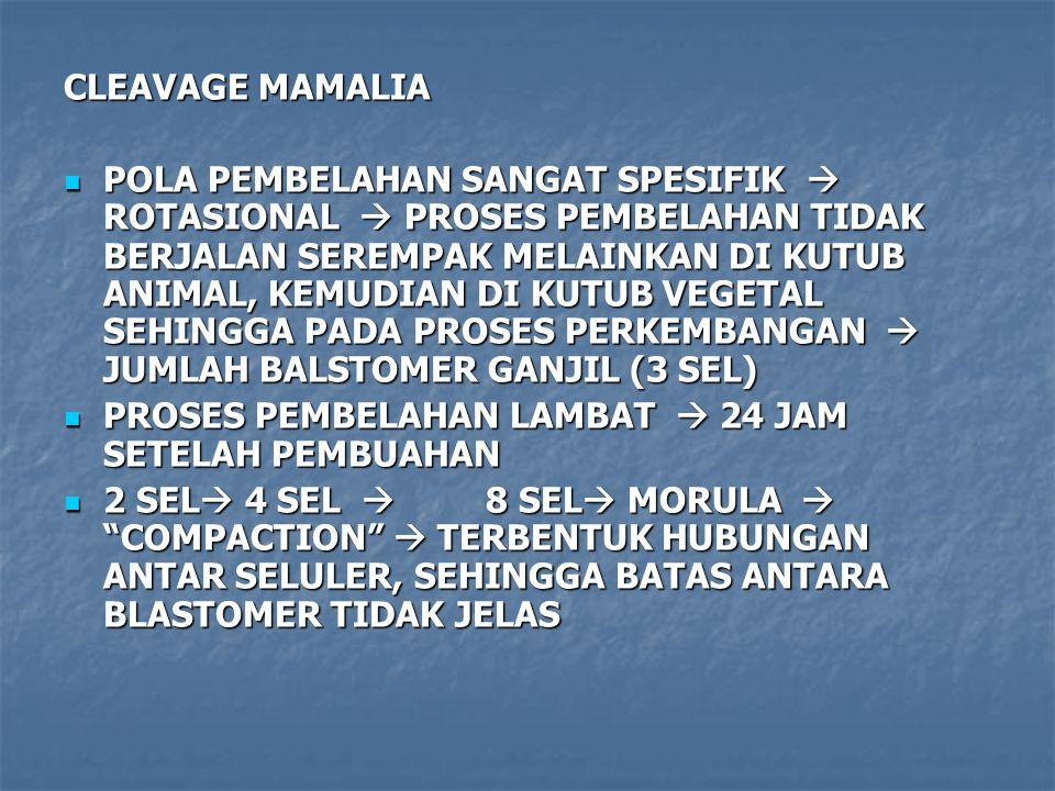 CLEAVAGE MAMALIA