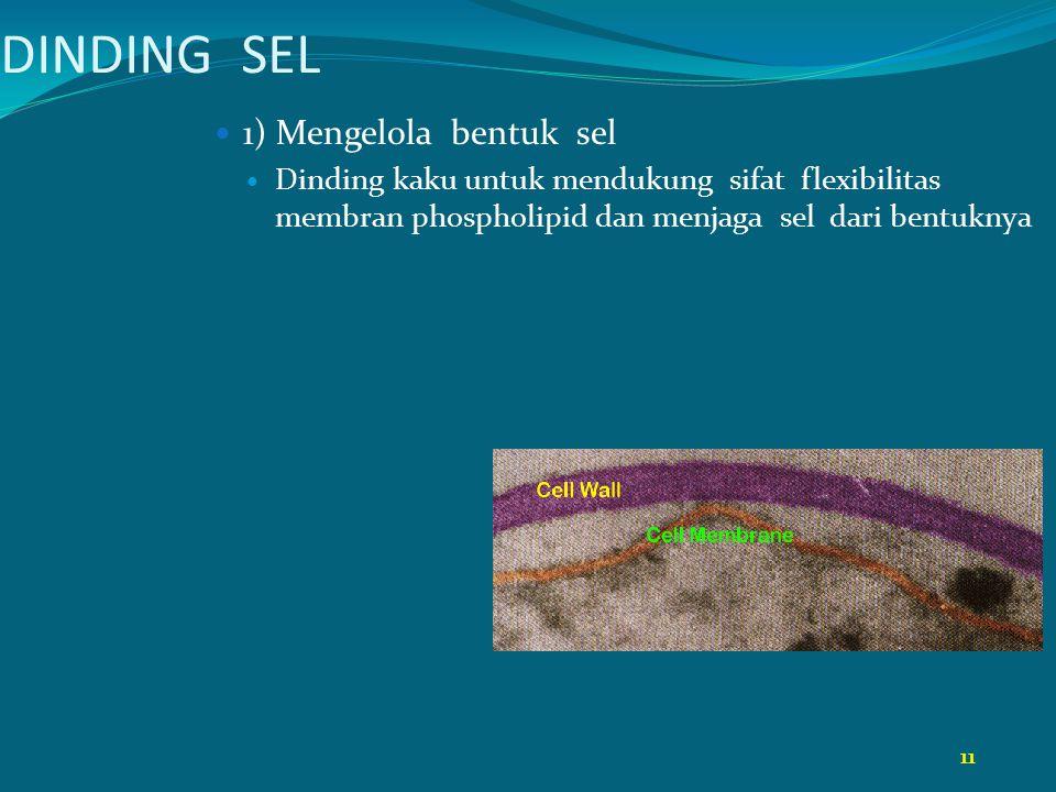 DINDING SEL 1) Mengelola bentuk sel