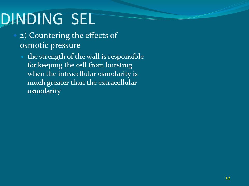 DINDING SEL 2) Countering the effects of osmotic pressure