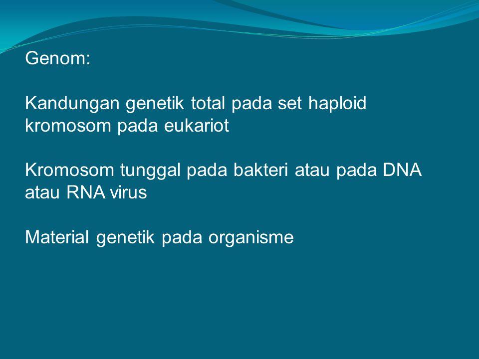 Genom: Kandungan genetik total pada set haploid kromosom pada eukariot. Kromosom tunggal pada bakteri atau pada DNA atau RNA virus.