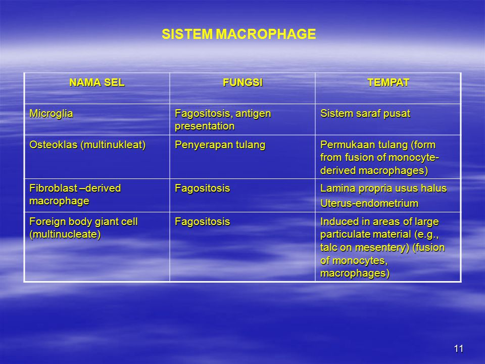 SISTEM MACROPHAGE NAMA SEL FUNGSI TEMPAT Microglia
