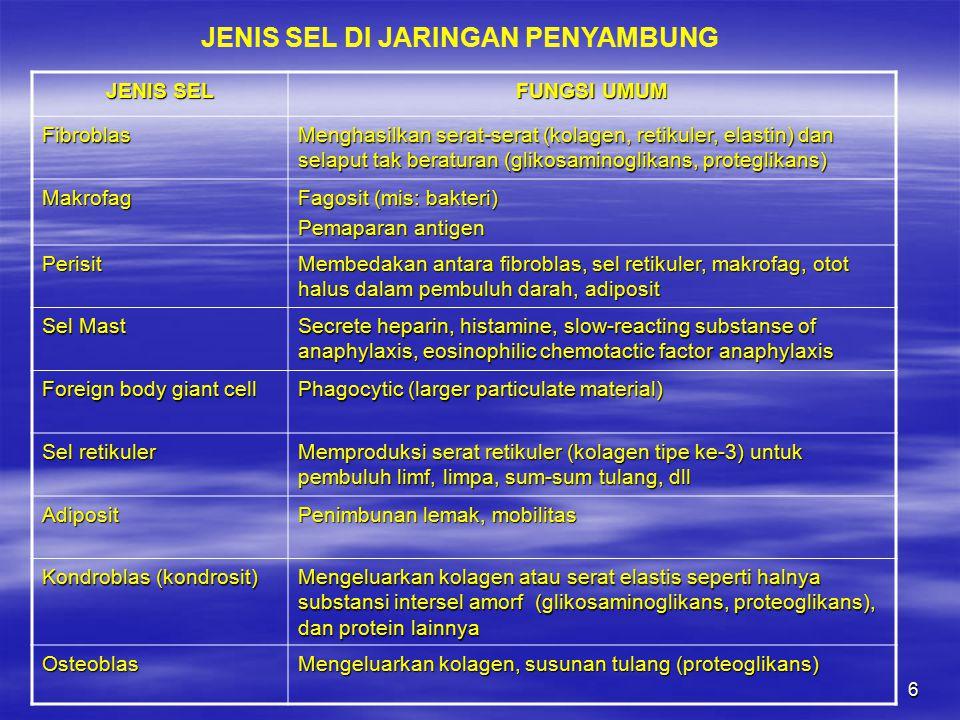 JENIS SEL DI JARINGAN PENYAMBUNG