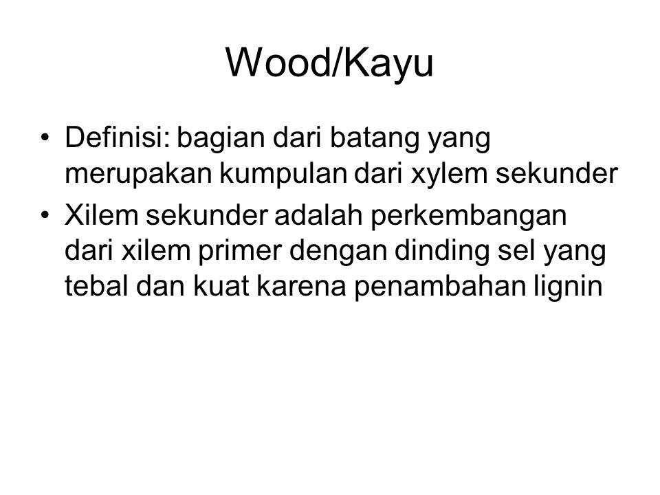 Wood/Kayu Definisi: bagian dari batang yang merupakan kumpulan dari xylem sekunder.