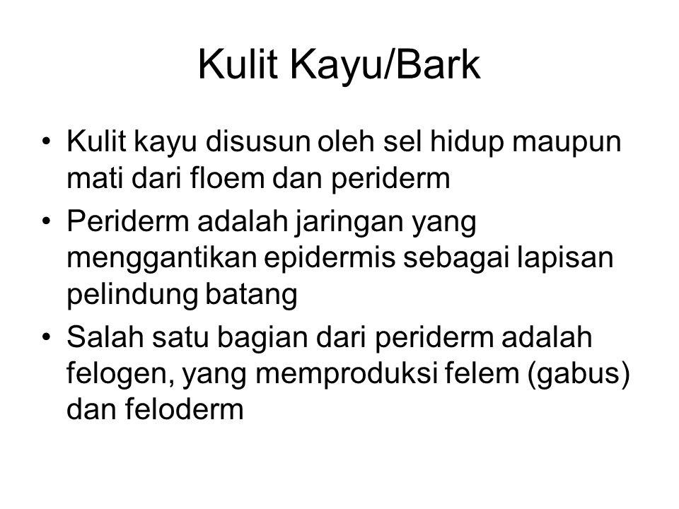 Kulit Kayu/Bark Kulit kayu disusun oleh sel hidup maupun mati dari floem dan periderm.