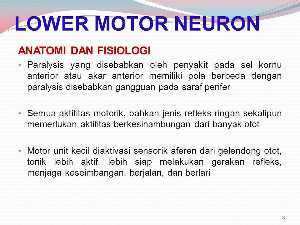 LOWER MOTOR NEURON ANATOMI DAN FISIOLOGI