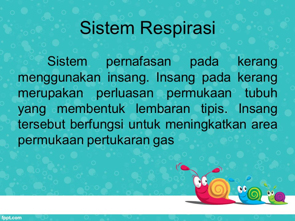 Sistem Respirasi