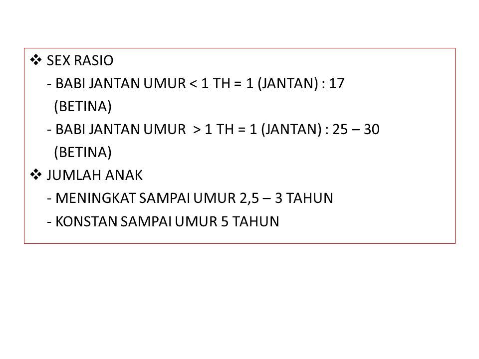 SEX RASIO - BABI JANTAN UMUR < 1 TH = 1 (JANTAN) : 17. (BETINA) - BABI JANTAN UMUR > 1 TH = 1 (JANTAN) : 25 – 30.