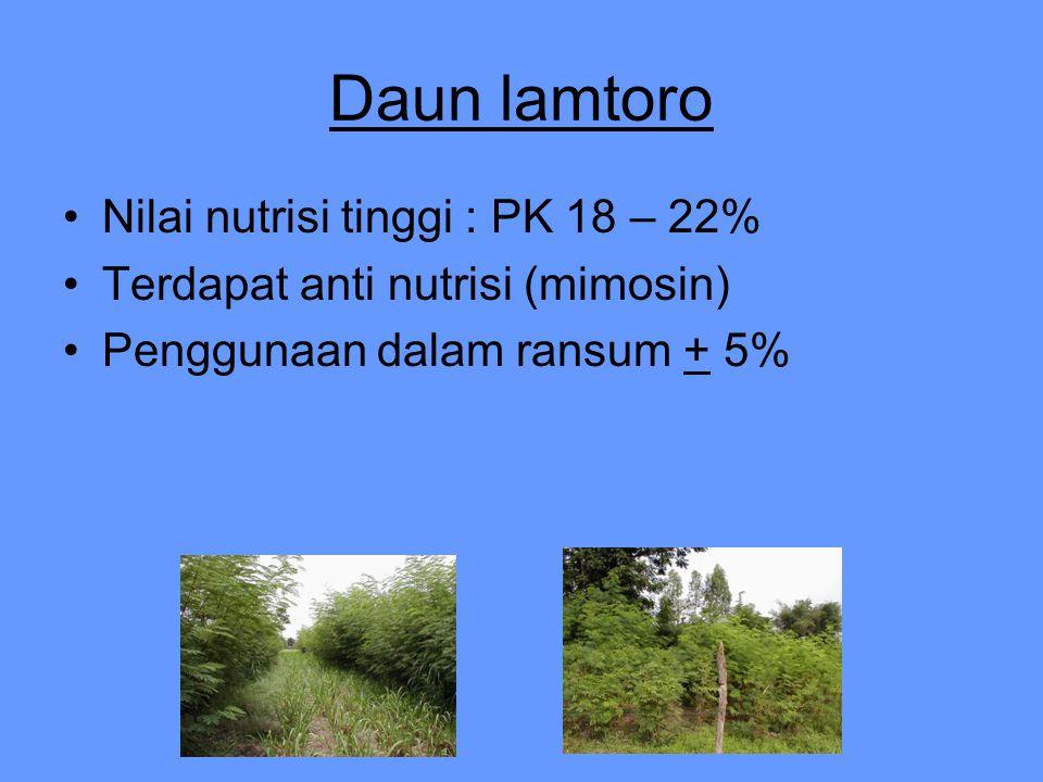 Daun lamtoro Nilai nutrisi tinggi : PK 18 – 22%