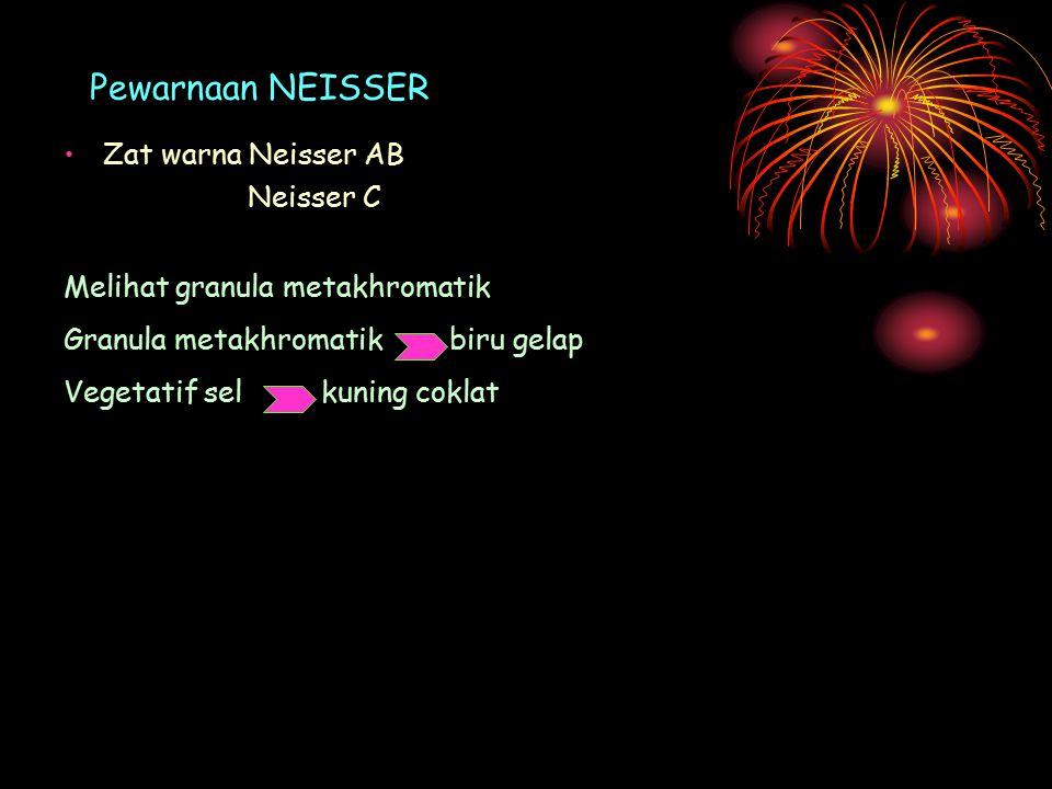 Pewarnaan NEISSER Zat warna Neisser AB Neisser C