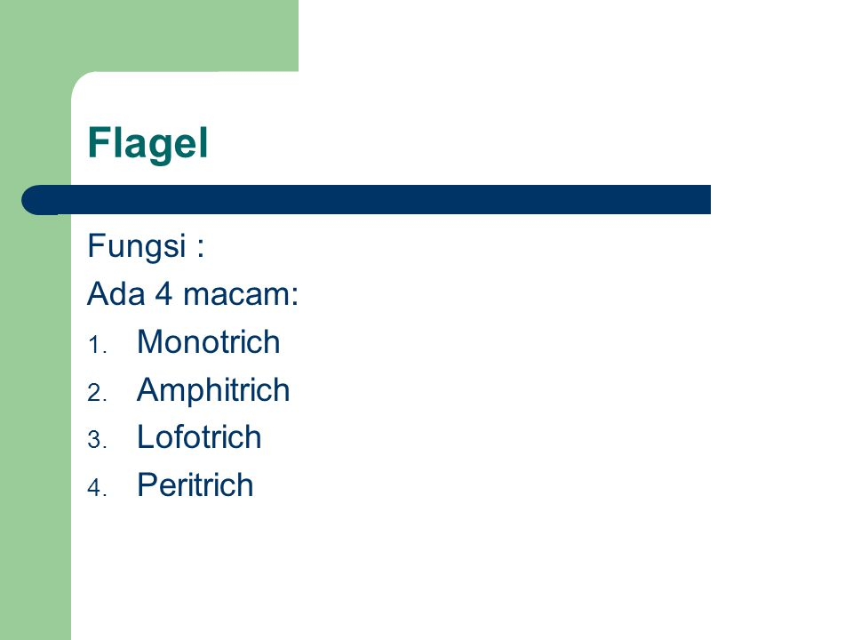 Flagel Fungsi : Ada 4 macam: Monotrich Amphitrich Lofotrich Peritrich