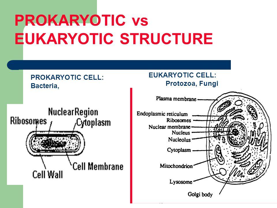 PROKARYOTIC vs EUKARYOTIC STRUCTURE