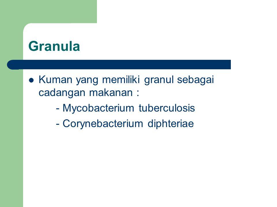 Granula Kuman yang memiliki granul sebagai cadangan makanan :