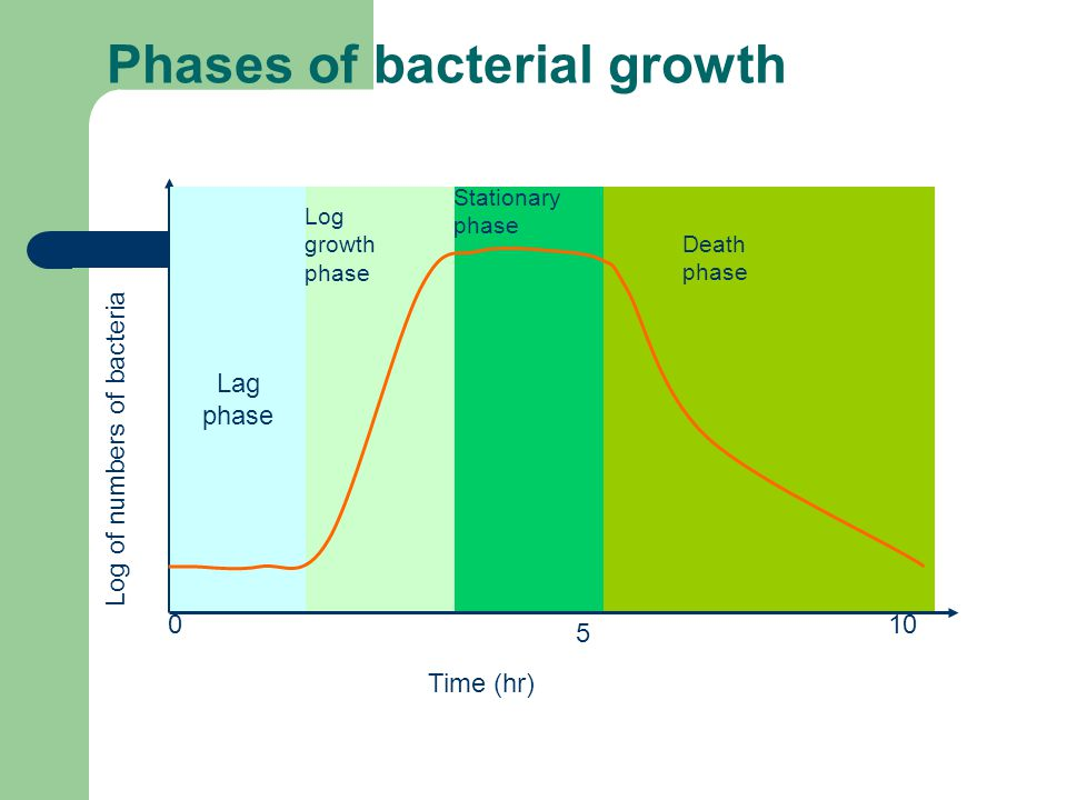 Phases of bacterial growth