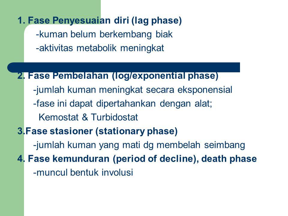 1. Fase Penyesuaian diri (lag phase)