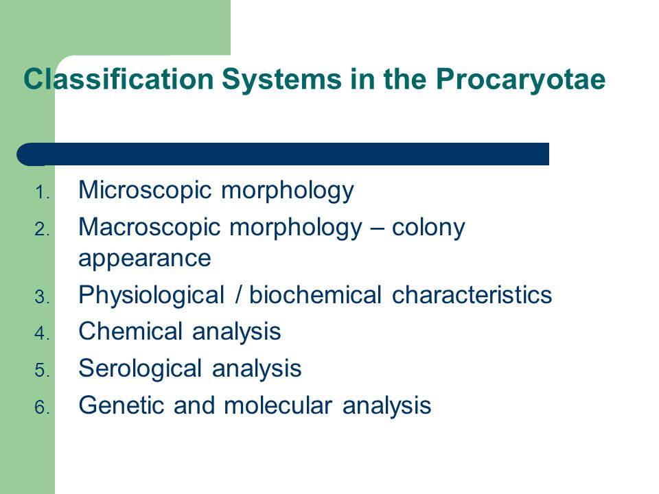 Classification Systems in the Procaryotae