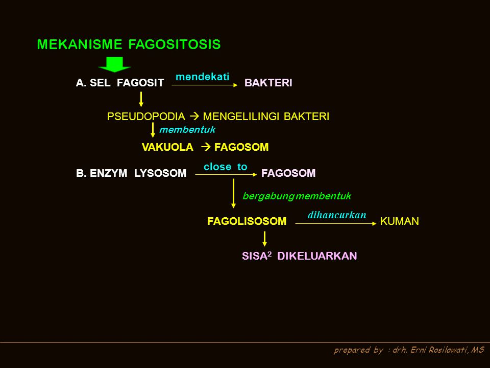 MEKANISME FAGOSITOSIS