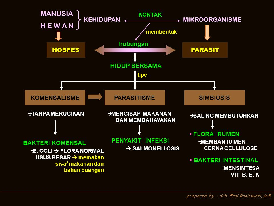 MANUSIA H E W A N KEHIDUPAN MIKROORGANISME hubungan HOSPES PARASIT