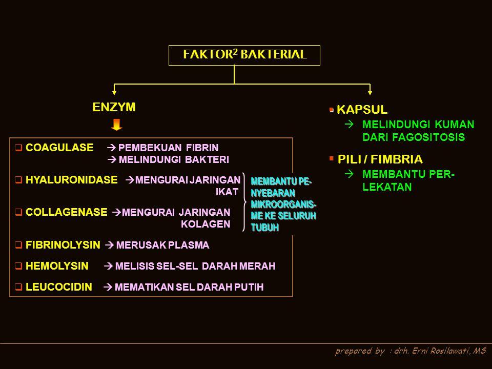 FAKTOR2 BAKTERIAL ENZYM PILI / FIMBRIA KAPSUL