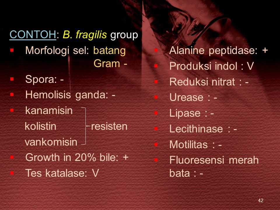 CONTOH: B. fragilis group