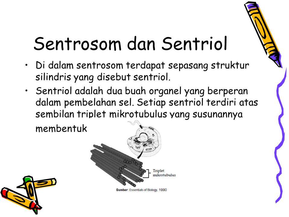 Sentrosom dan Sentriol