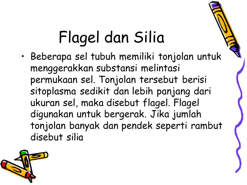 Flagel dan Silia