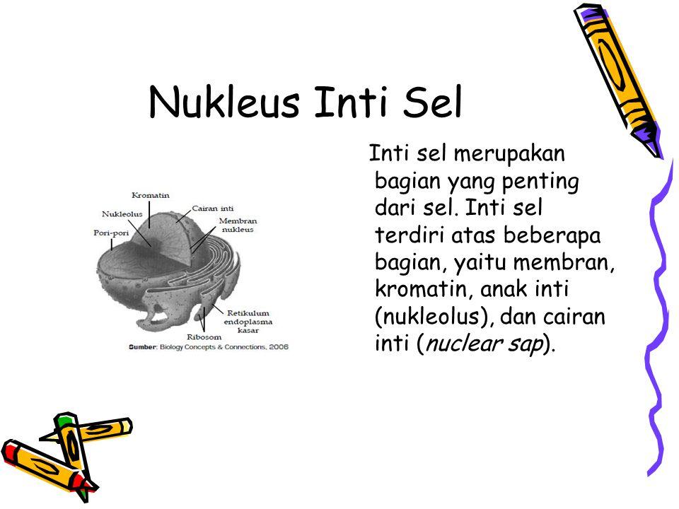 Nukleus Inti Sel