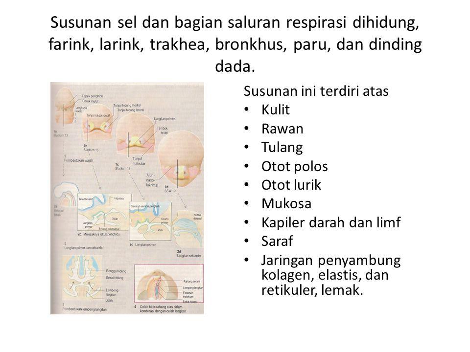 Susunan sel dan bagian saluran respirasi dihidung, farink, larink, trakhea, bronkhus, paru, dan dinding dada.