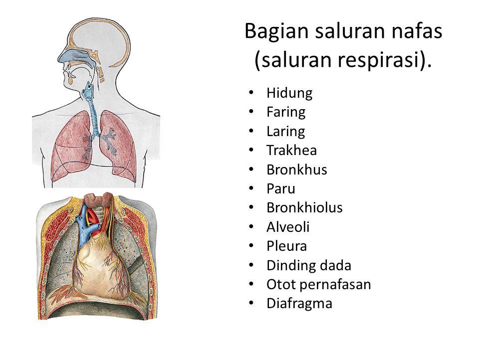 Bagian saluran nafas (saluran respirasi).