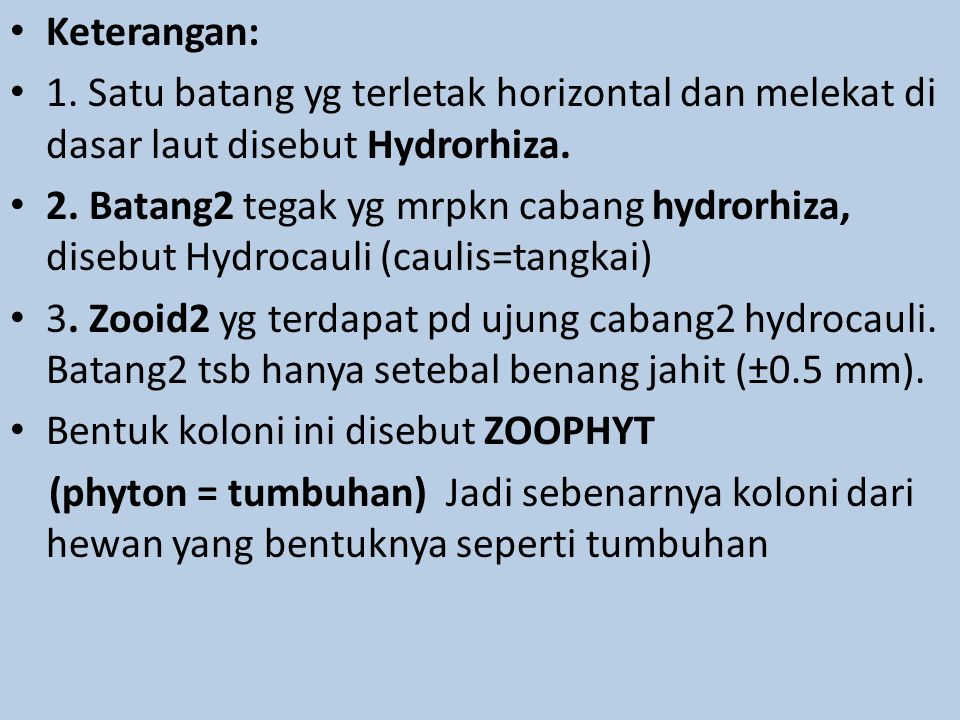 Keterangan: 1. Satu batang yg terletak horizontal dan melekat di dasar laut disebut Hydrorhiza.
