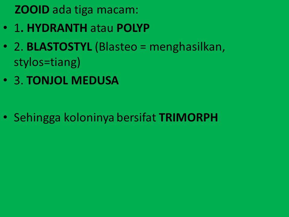 ZOOID ada tiga macam: 1. HYDRANTH atau POLYP. 2. BLASTOSTYL (Blasteo = menghasilkan, stylos=tiang)