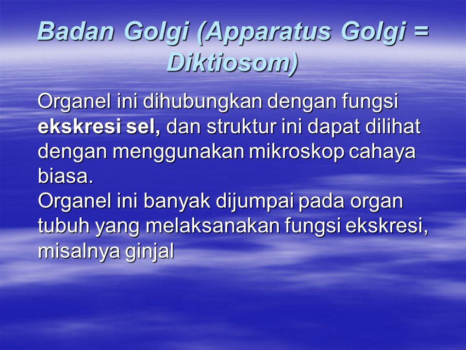 Badan Golgi (Apparatus Golgi = Diktiosom)