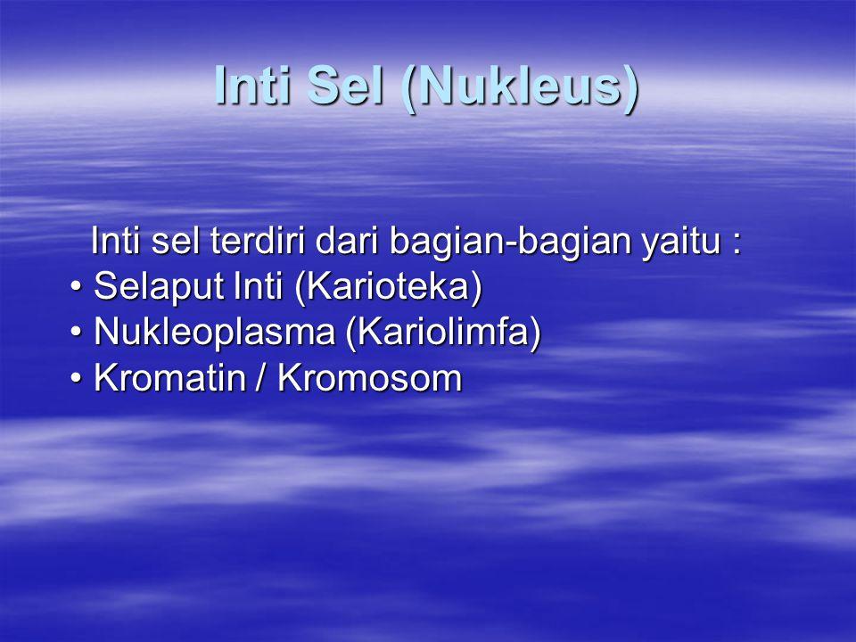 Inti Sel (Nukleus) Inti sel terdiri dari bagian-bagian yaitu : • Selaput Inti (Karioteka) • Nukleoplasma (Kariolimfa) • Kromatin / Kromosom.