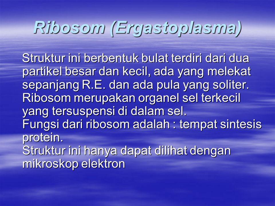 Ribosom (Ergastoplasma)