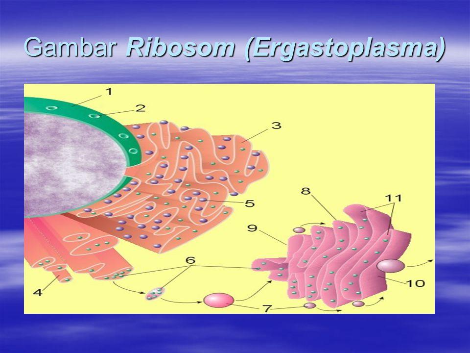 Gambar Ribosom (Ergastoplasma)