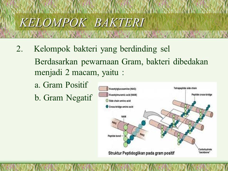 KELOMPOK BAKTERI 2. Kelompok bakteri yang berdinding sel