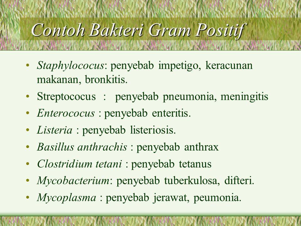 Contoh Bakteri Gram Positif