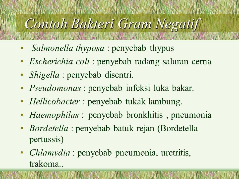 Contoh Bakteri Gram Negatif
