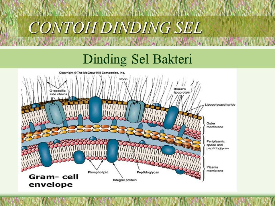 CONTOH DINDING SEL Dinding Sel Bakteri