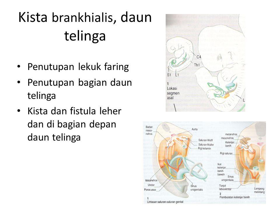 Kista brankhialis, daun telinga