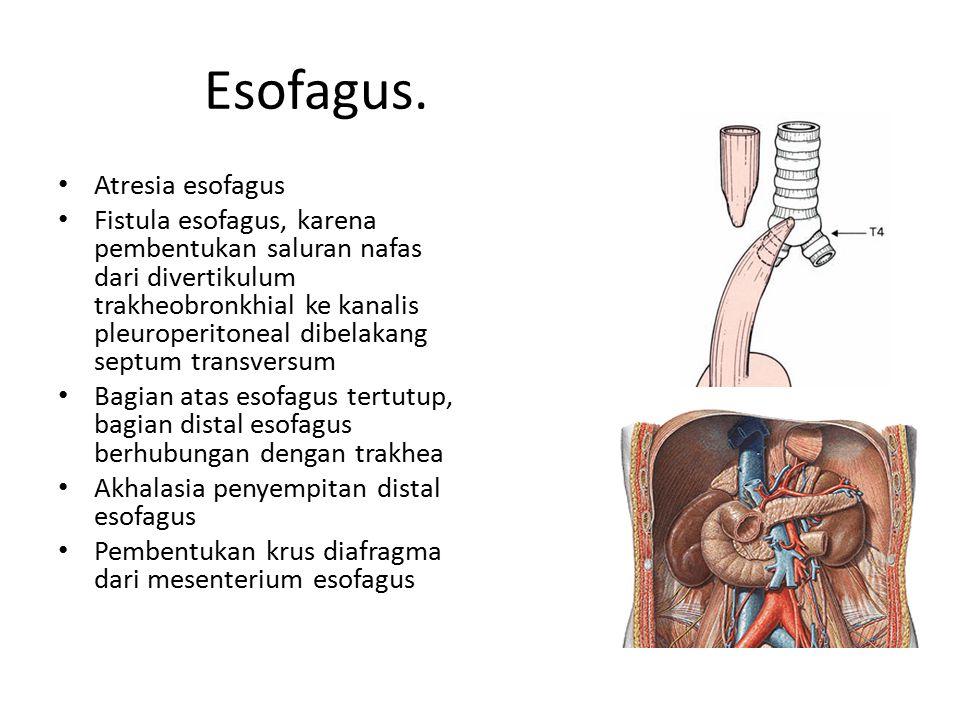 Esofagus. Atresia esofagus