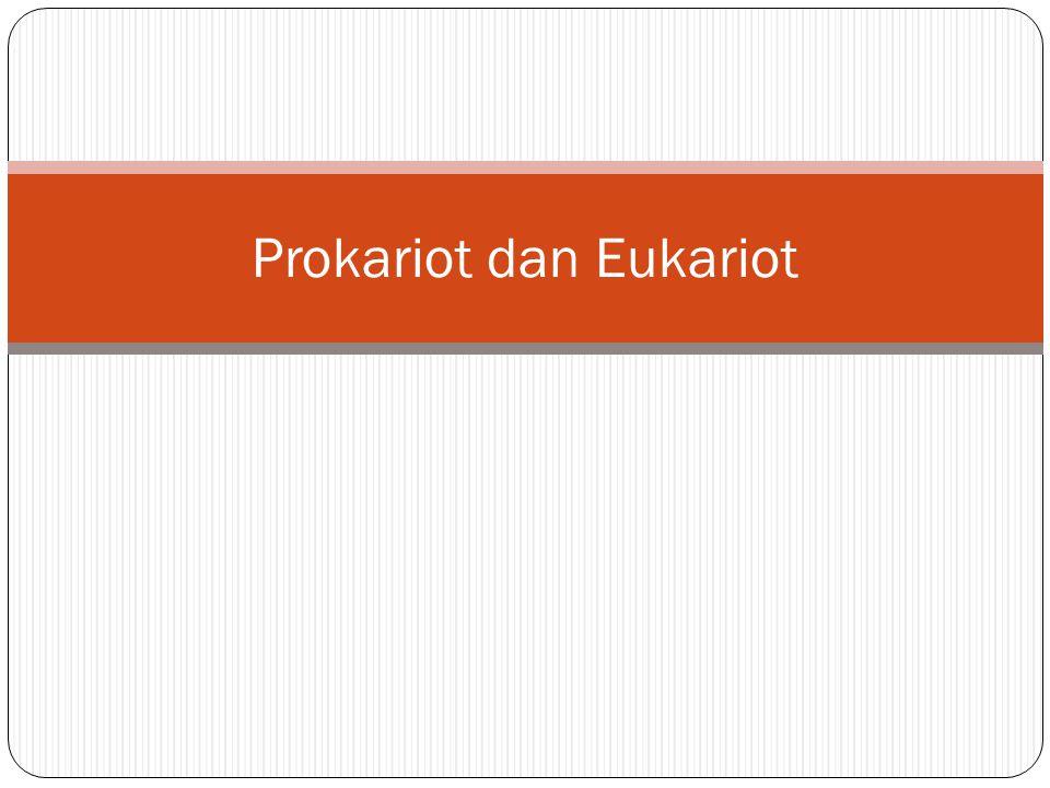 Prokariot dan Eukariot