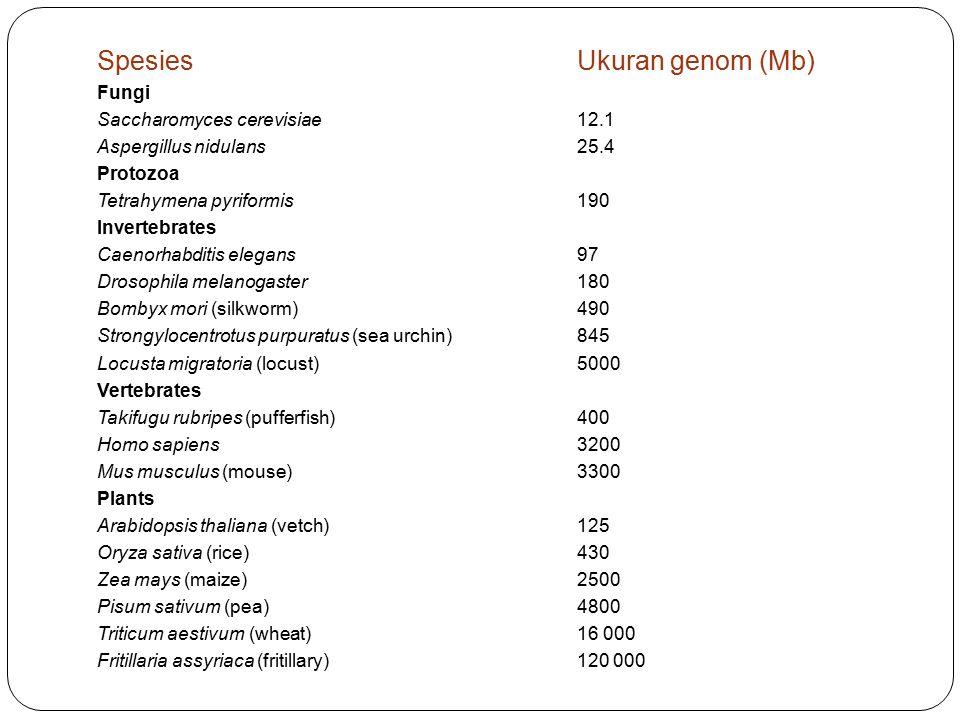 Spesies Ukuran genom (Mb) Fungi Saccharomyces cerevisiae 12.1