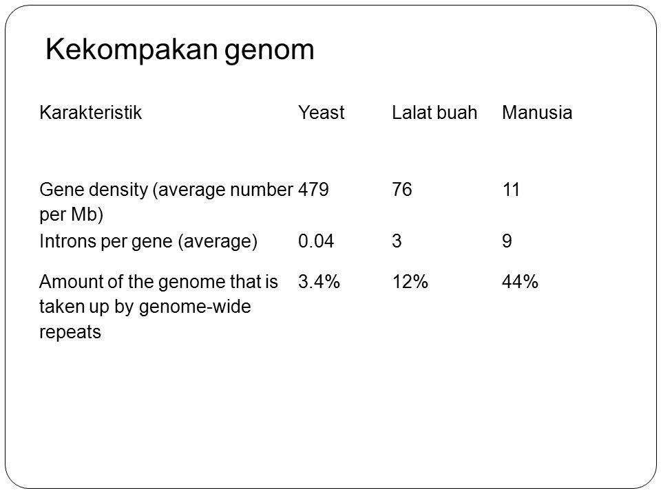 Kekompakan genom Karakteristik Yeast Lalat buah Manusia
