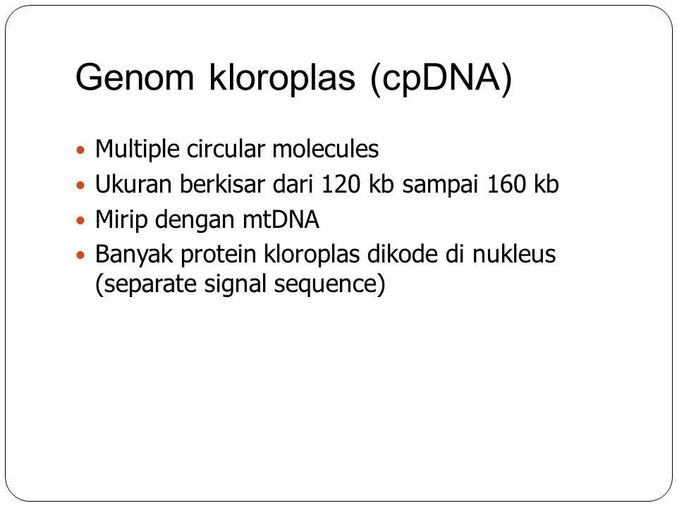 Genom kloroplas (cpDNA)