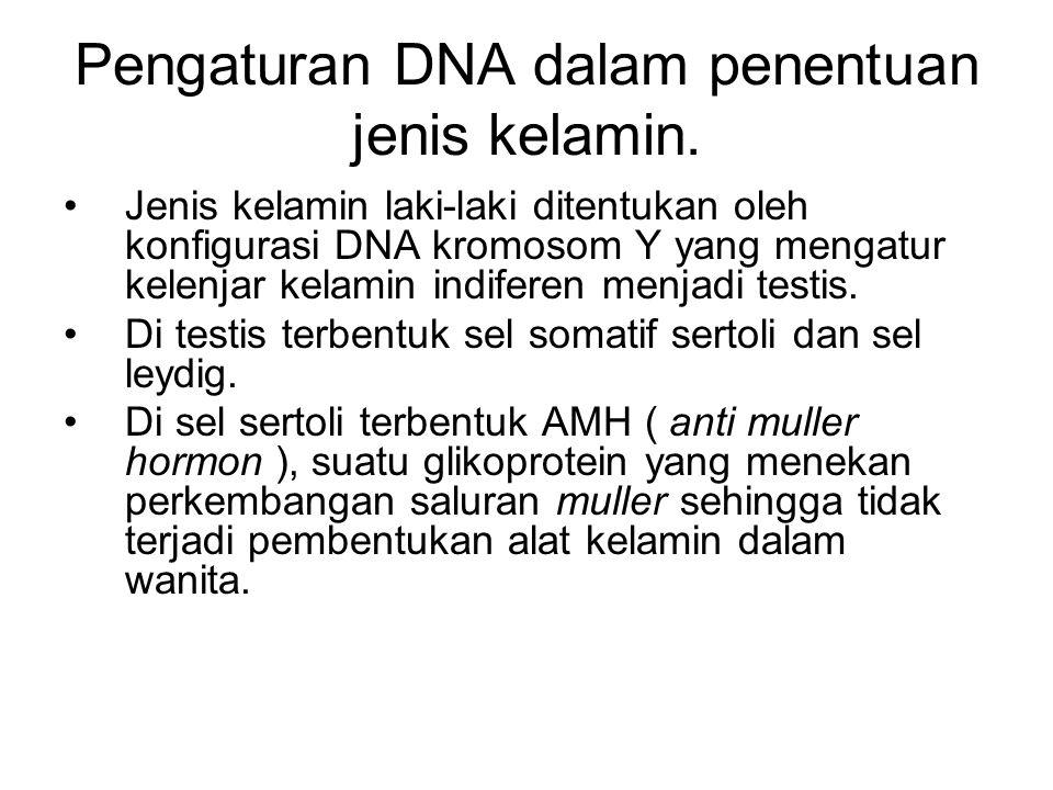 Pengaturan DNA dalam penentuan jenis kelamin.