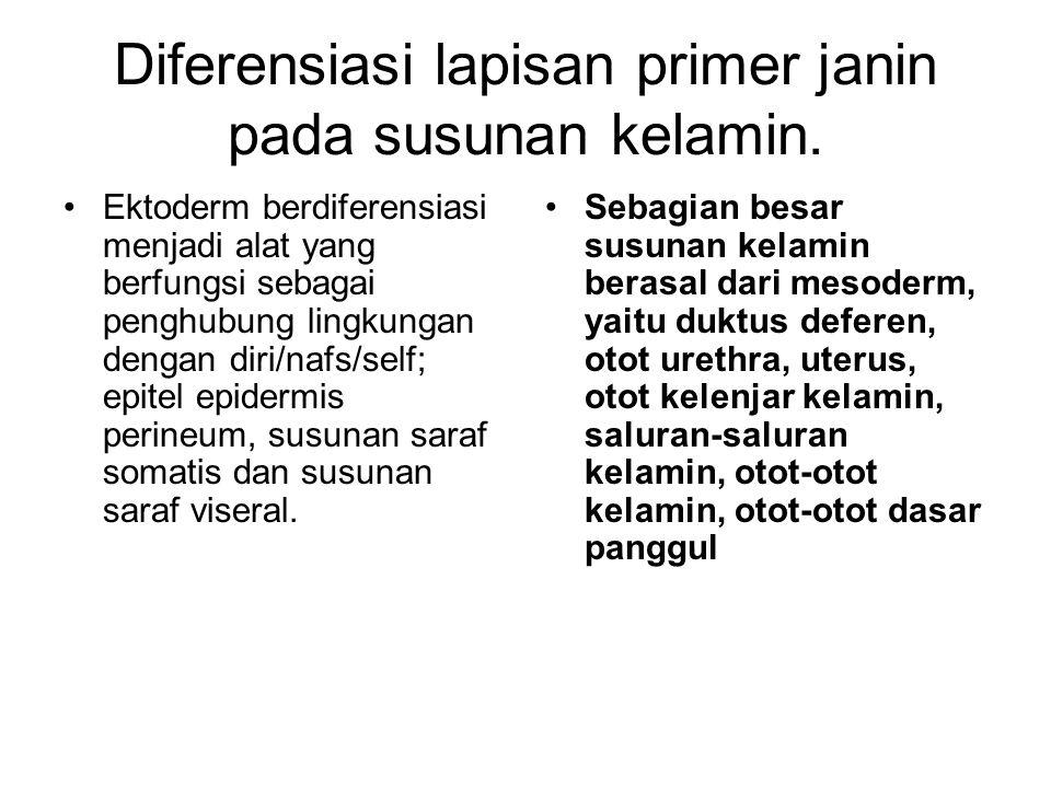 Diferensiasi lapisan primer janin pada susunan kelamin.