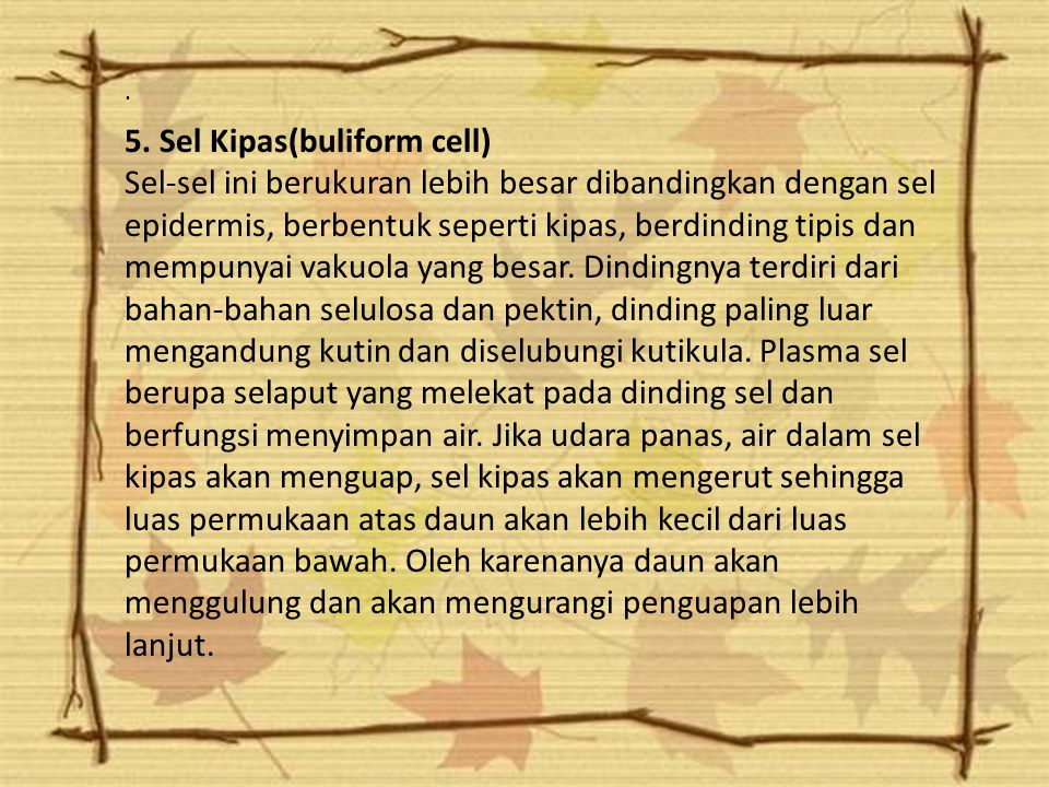 5. Sel Kipas(buliform cell)