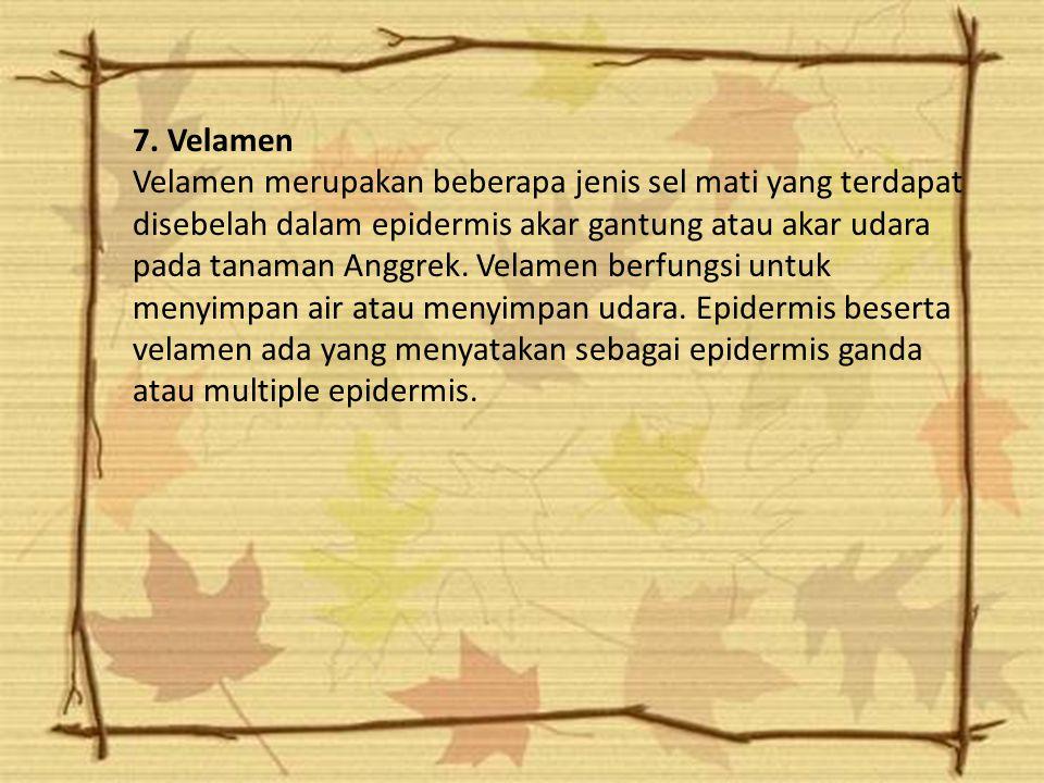 7. Velamen