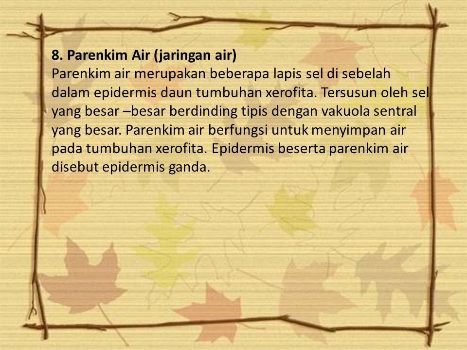 8. Parenkim Air (jaringan air)