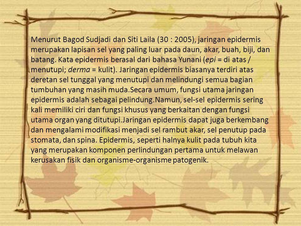 Menurut Bagod Sudjadi dan Siti Laila (30 : 2005), jaringan epidermis merupakan lapisan sel yang paling luar pada daun, akar, buah, biji, dan batang.
